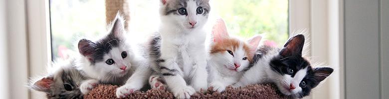 06 kittens