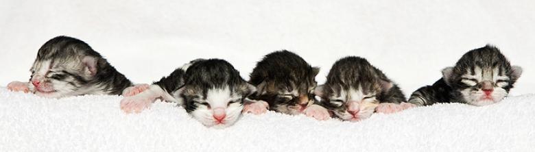 05 kittens